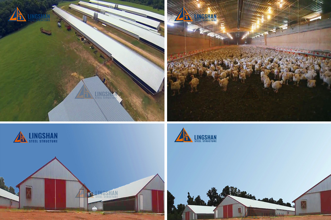 low cost steel structure poultry