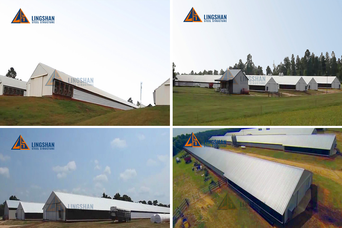 Prefab metal frame broiler poultry chicken steel farm house for 10000 chickens