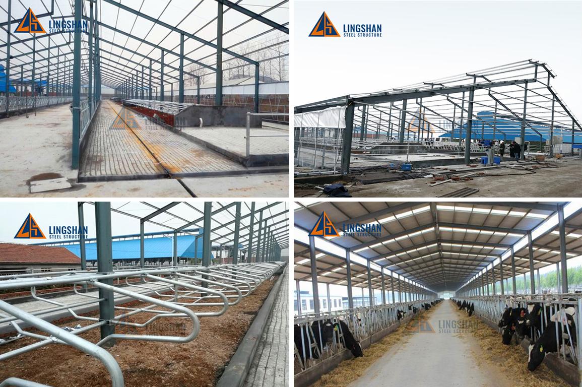 Prefab steel structure dairy cow